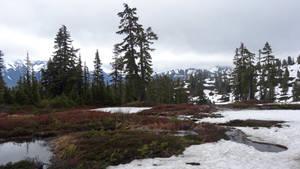 Mt. Baker IV