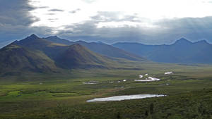 Tombstone Tundra I