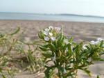 Flowers in the Sand by PrincessValium