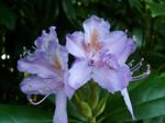 Flowers by PrincessValium