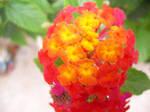 Flower by PrincessValium