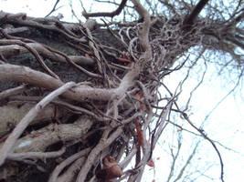 Climb up the tree...