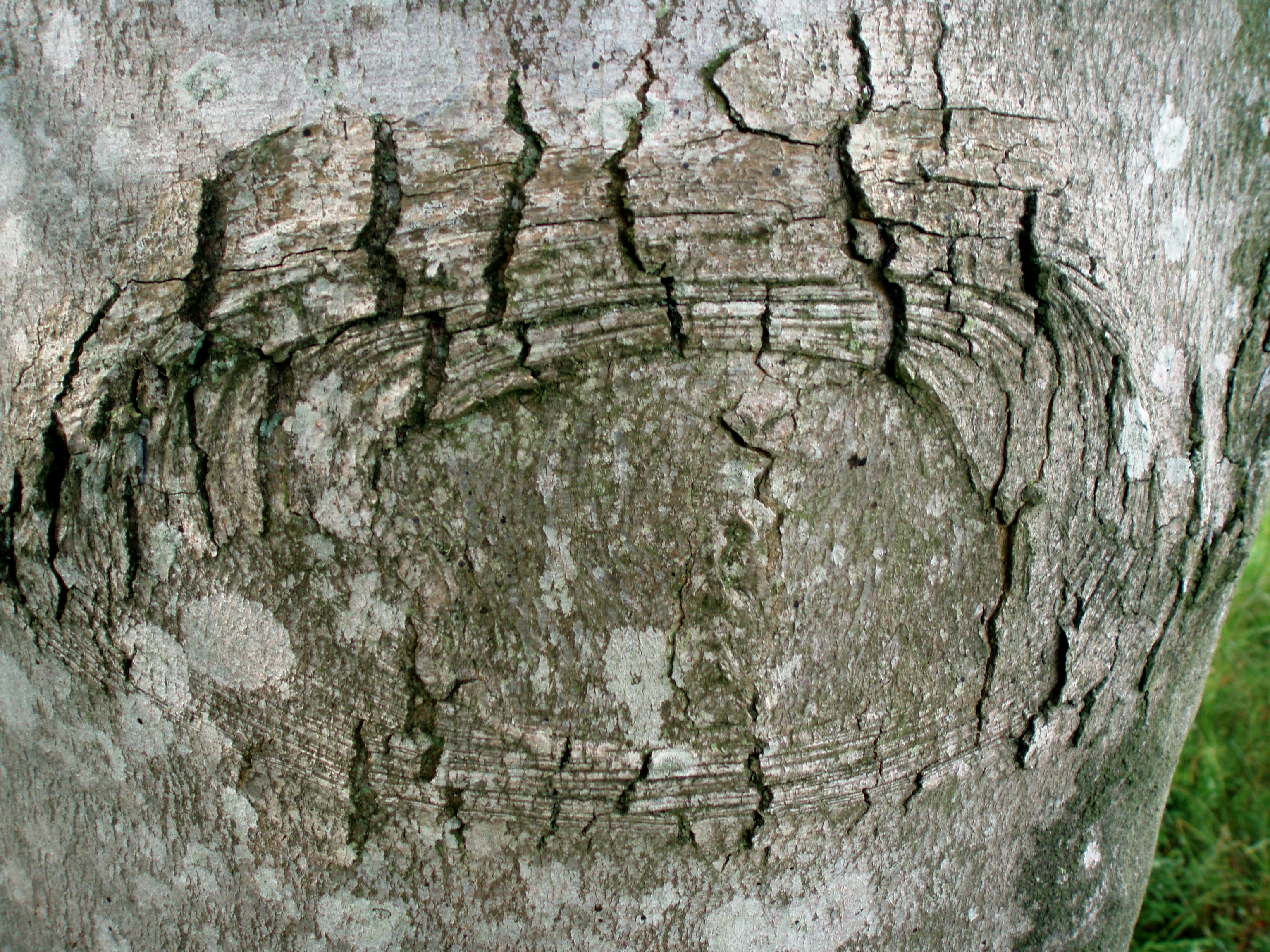 Tree Bark Texture Png Tree Bark Texture no 2 by