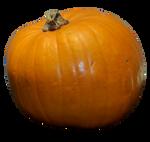 Stock Pumpkin 1