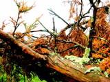 Tiger Land by xasylumx