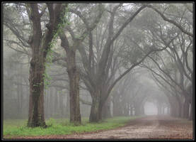 Foggy Morn 3 by Laurie4000