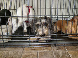 Excree Scruff In A Cage by Laurie4000