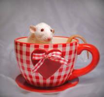 Cup of Love by TamarViewStudio