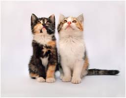 Kittens I by TamarViewStudio