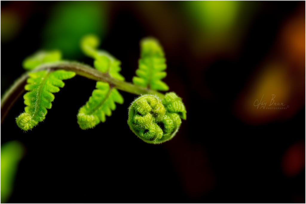 Baby fern by jaybrar on deviantart for Baby fern plant