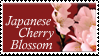 Japanese Cherry Blossom Stamp by Strawberry-of-Love