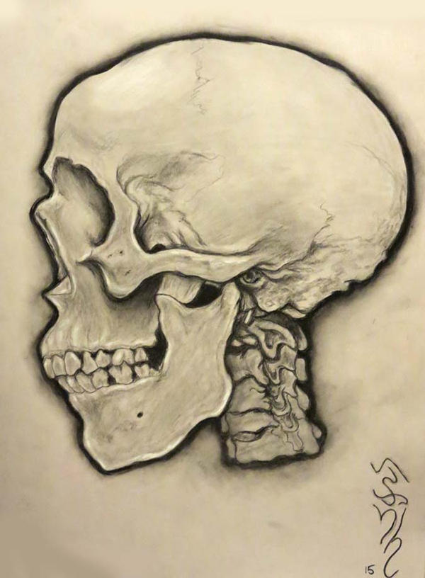 It's just an image of Canny Skull Profile Drawing