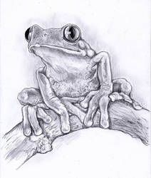 Traditional Drawing Tree Frog!! Video on YT! by Halasaar01