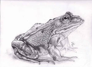 Traditional Drawing of a Frog!