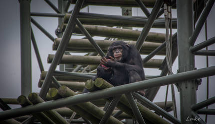 Seoul! Zoo: Snack Break