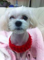 My dog