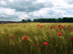 Ach fields
