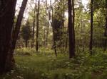...woods