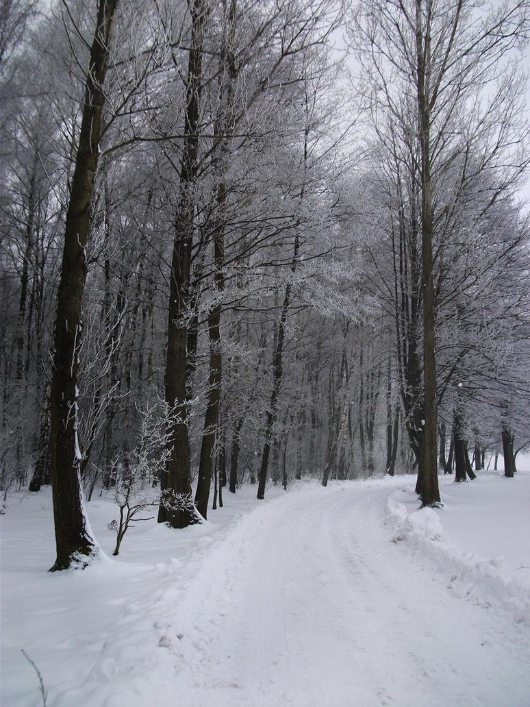 Winter 1 by feainne-stock