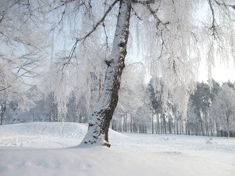 Winter Magical Tree