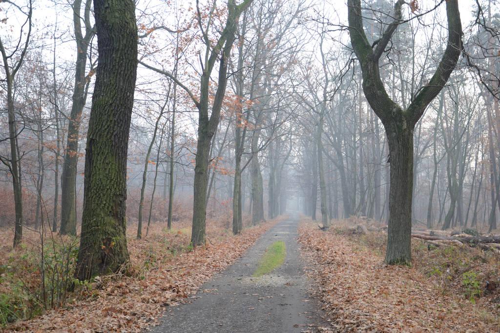 Autumnal Path by feainne-stock