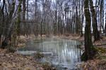 Turbid Pond