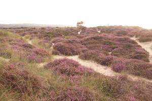 Moorland by feainne-stock
