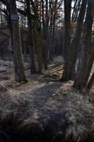 Dark Woods by feainne-stock