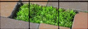 grasssss / f2u