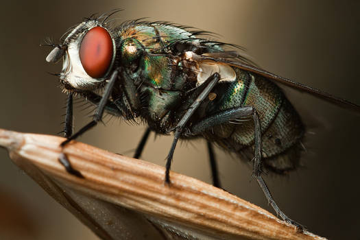 There's a Fly in My Backyard