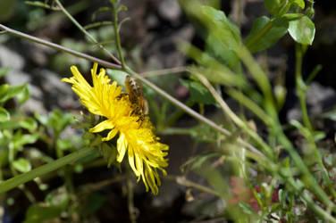 Bee by LockwoodE3