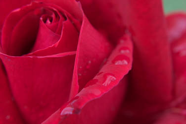 A Rose So Red by LockwoodE3