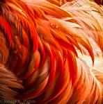 Flamingo by kaiya880