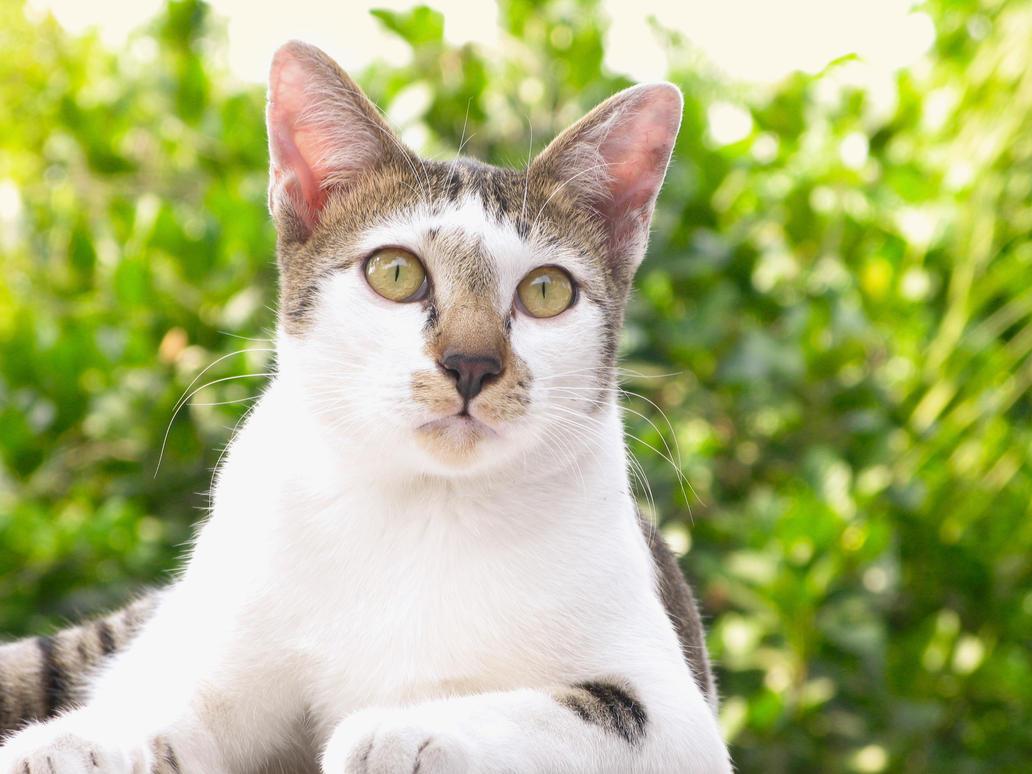 Cat 2 by cowpuai