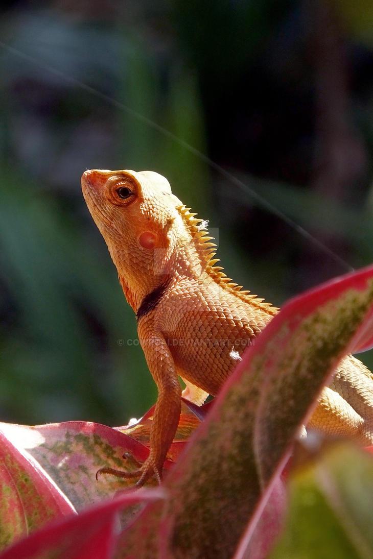 Lizard by cowpuai