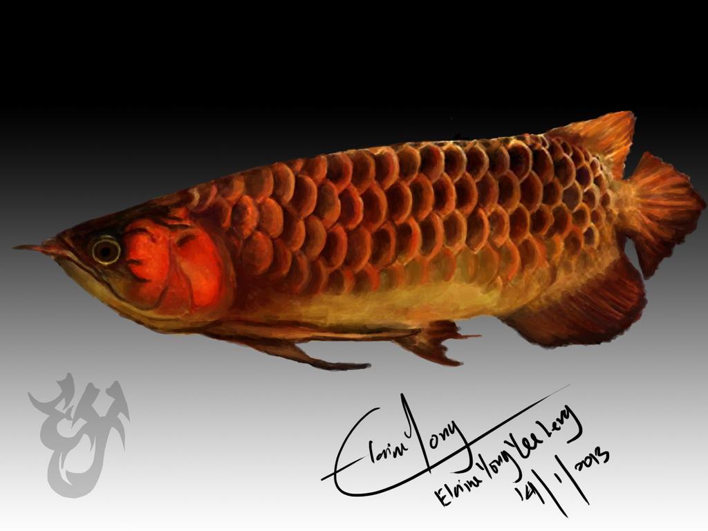 dragon fish at wal...