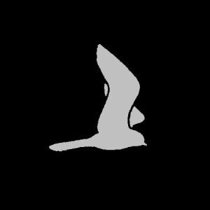 Chotacabras's Profile Picture