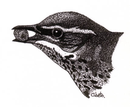 Turdus iliacus