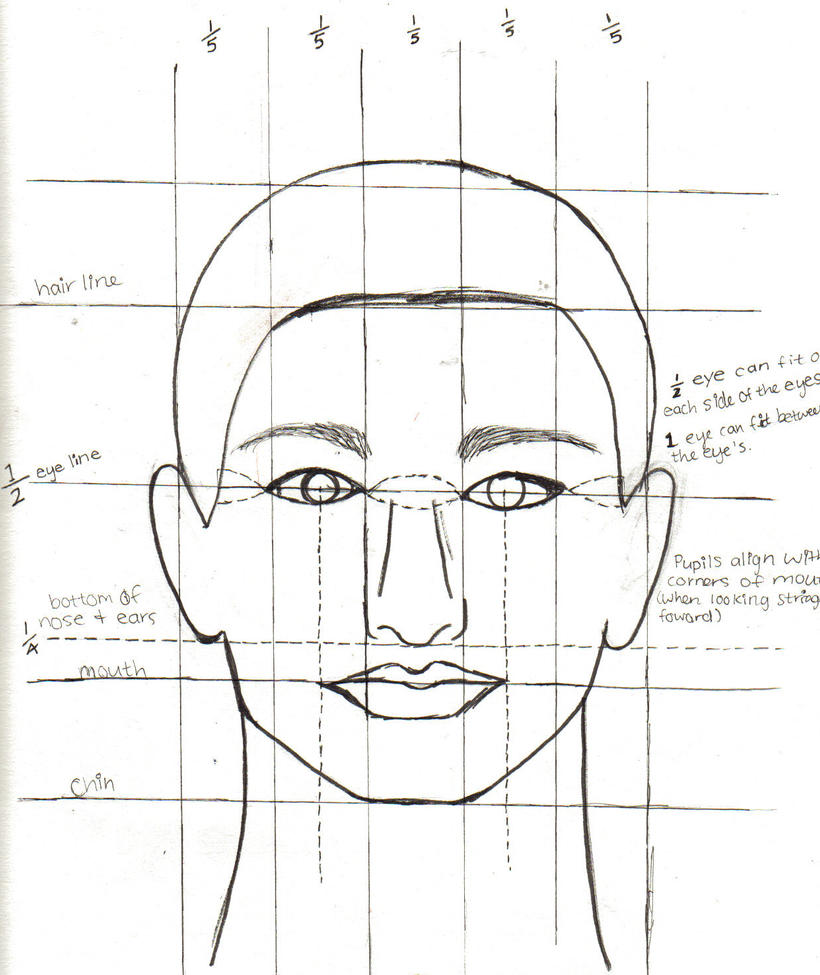 face proportions by ashley2081 on deviantart