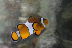 Nemo by Magellan89