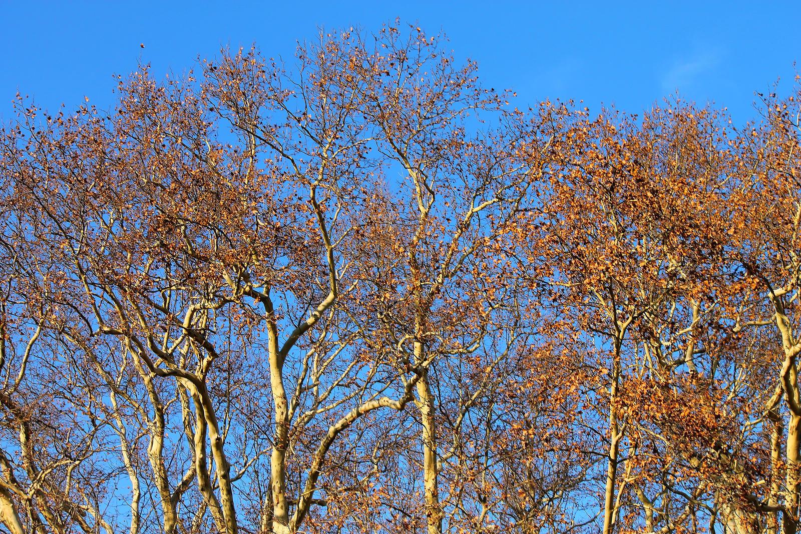 Autumn by Magellan89