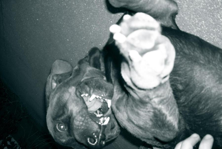 papapiolo's Profile Picture
