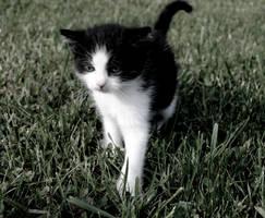 cat by KajaaL