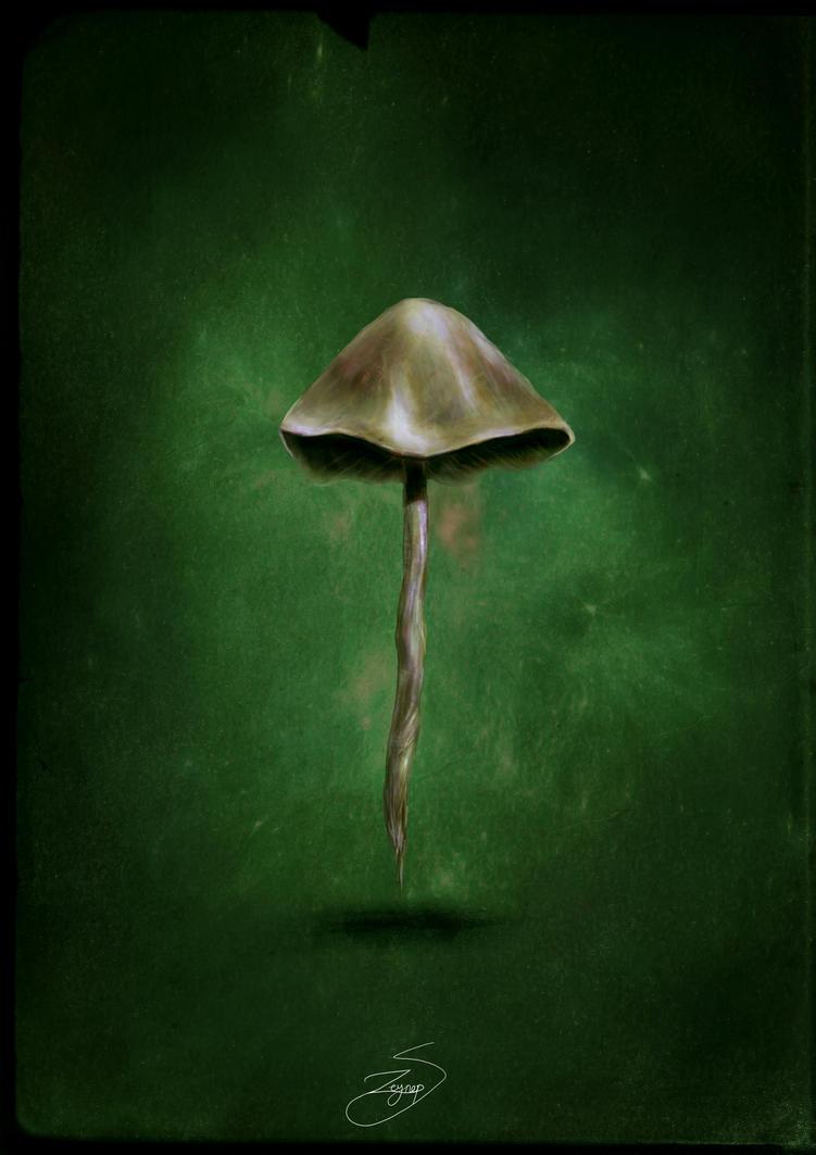 Fungi by PurpleScissors