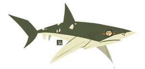 Pacific Sharpnose Shark
