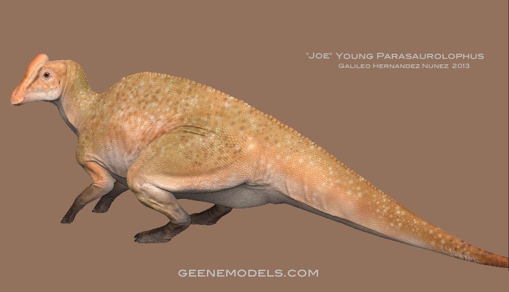 Joe Young  Parasaurolophus by GalileoN
