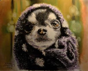 Chihuahua (pastel) by MrEyeCandy66