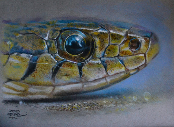 The Stare - colored pencil by MrEyeCandy66