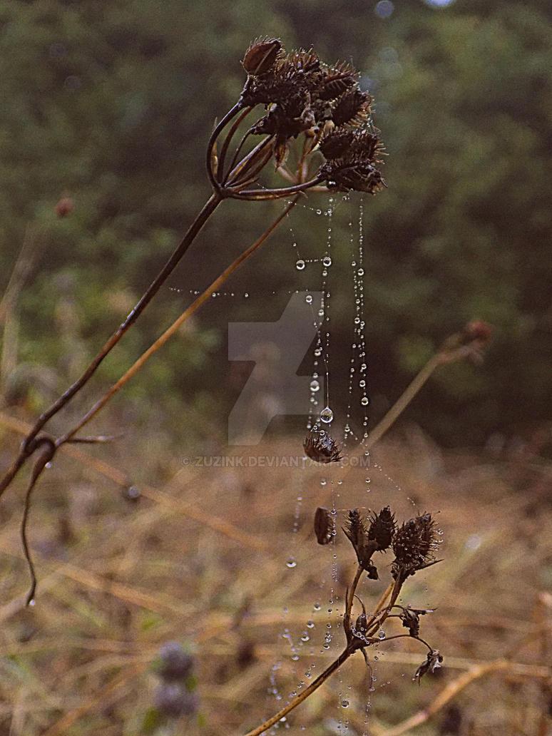 The rain's magic by zuzink