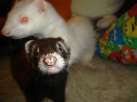 ferrets by kittycatjellybean